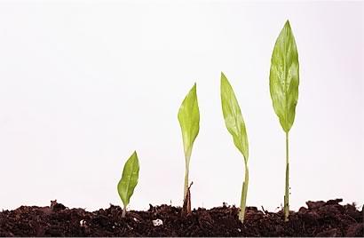 Acompanhe o crescimento da sua empresa de perto